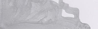 srebrny tusz winsor newton